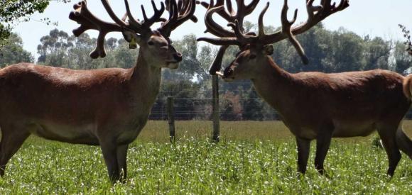 Le développement durable et les clôtures pour animaux